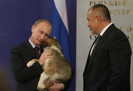 ...Путину щенка болгарской овчарки.