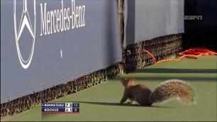 ВИДЕО: Во время матча US Open на корт выбежала белка