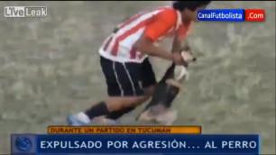 Футболист получил красную карточку за грубое обращение с собакой на поле (+видео)