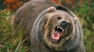 На вратаря шведской хоккейной команды напал медведь