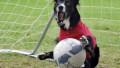 В Испании футбольный болельщик бросил в судью собаку