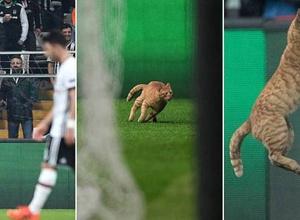"""УЕФА открыл дело в отношении """"Бешикташа"""" из-за выбежавшего на поле кота в матче Лиги чемпионов"""