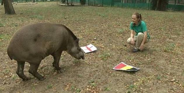 Тапир из алматинского зоопарка предсказал исход финала ЧМ-2018