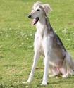 Тазы, тобет и ЮНЕСКО. Возрождение пород собак и официальное признание итбегi видом спорта