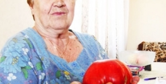 Актюбинская пенсионерка вырастила супер-помидор