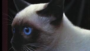 Подмосковная школьница умерла от укуса бешеной кошки
