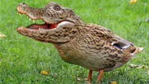 Казахстанский генетик скрестил цыпленка с крокодилом