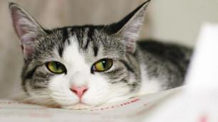 В Великобритании кошка спасла нелегала от депортации