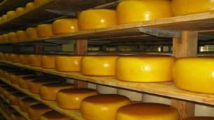 Украина попросит у Онищенко доказательств о плохом сыре