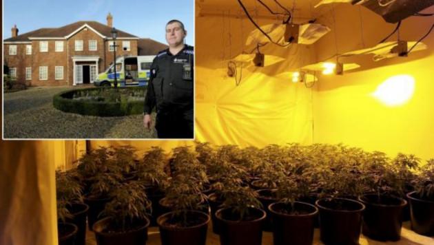 """Полиция обнаружила конопляную """"ферму"""" в доме за миллион долларов"""