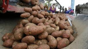 Скульптор подал в суд на музей из-за картофеля