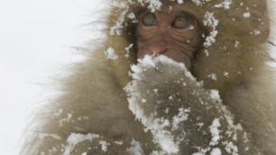 В казахстанском зоопарке обезьян стали согревать вином