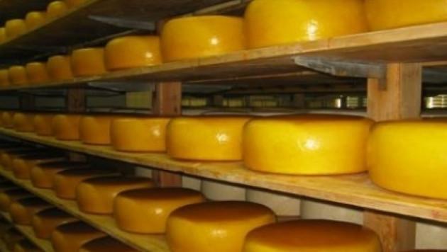 Россия ввела запрет на ввоз сыра из Украины
