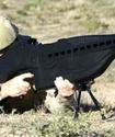 Казахстанских полицейских вооружат несмертельным оружием