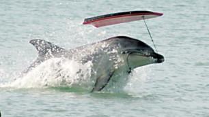 Ученые предложили применять права человека к дельфинам