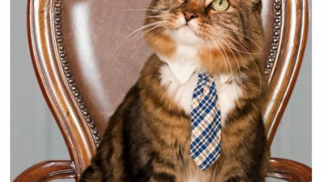 На пост сенатора США выдвинули кота