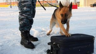 В Петербурге на детской площадке найден чемодан с телом пенсионерки