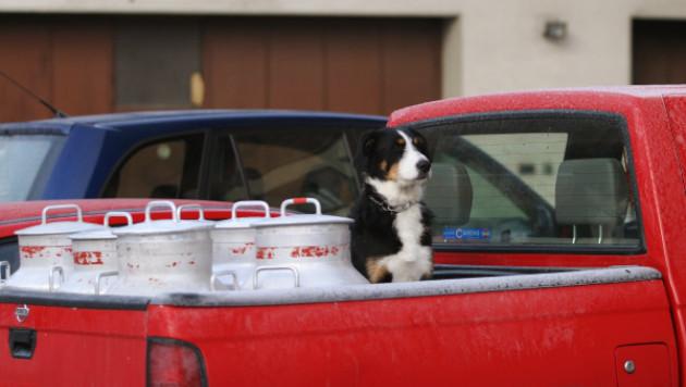 В Москве три пса угнали машину своего хозяина