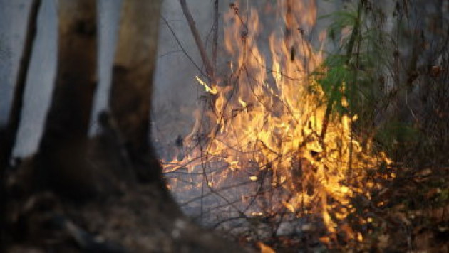 Брошенная в лесу сигарета стоила жителю Бурятии полмиллиарда рублей