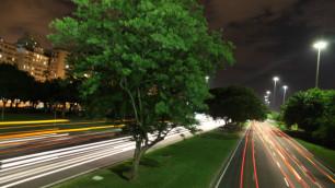 В США выбрали город для посадки дерева из космоса
