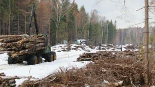 В Подмосковье избили эколога-защитника Химкинского леса