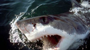 У побережья Шарм-эш-Шейх появилась акула