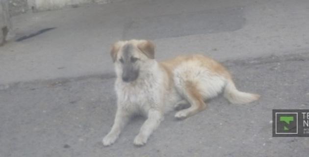 В Павлодаре появился свой Хатико