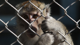 В Чикаго из-за подозрений на обезьянью оспу пассажиров продержали в самолете 3 часа