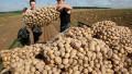 У гражданина Польши угнали грузовик с 20 тоннами картофеля в Москве